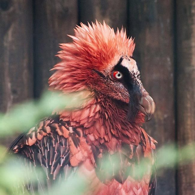 18 фантастических животных, которые живут рядом с нами, и которые могут исчезнуть навсегда, изображение №3