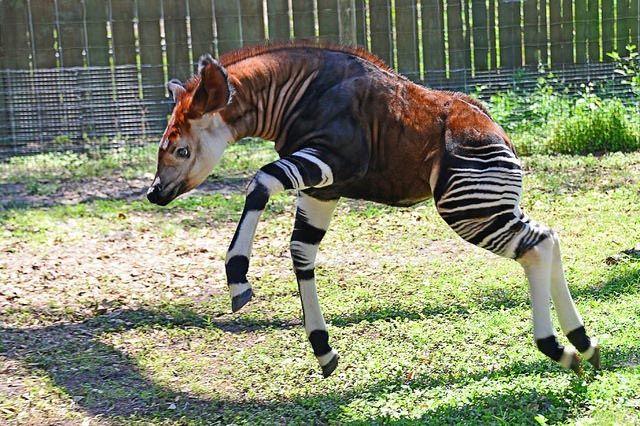 18 фантастических животных, которые живут рядом с нами, и которые могут исчезнуть навсегда, изображение №19